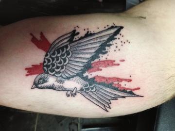 sparrow-marco